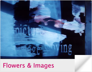 Flowers & Images